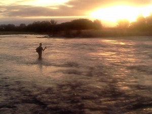 Nik Bielski fishing the evening rise on the Mataura River Southland NZ