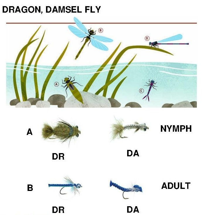 Lifecycle of insects we are very very interested in  Flysite