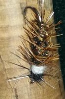 Wilkins Caddis